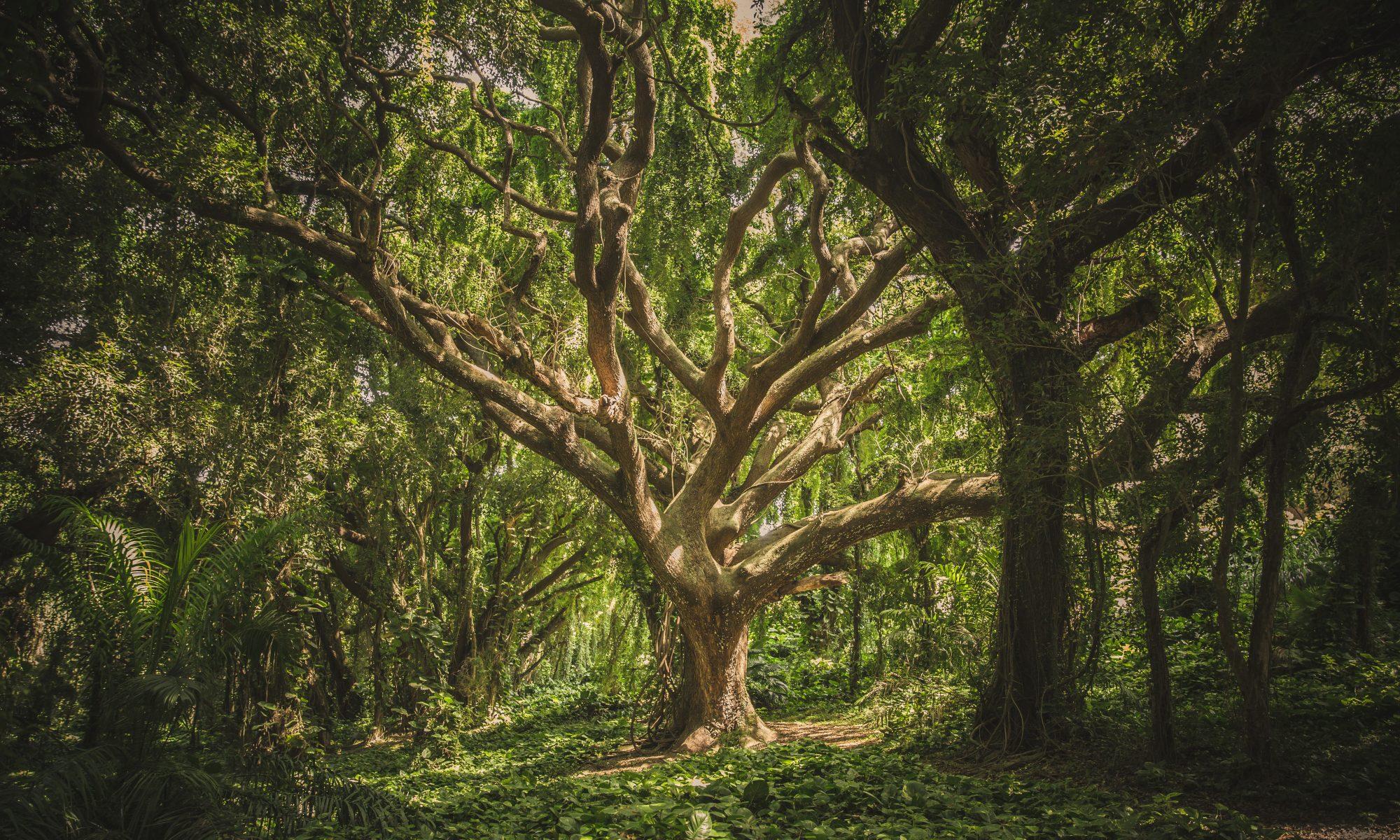 TreeGraSP